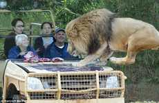 Werribee Open Range Zoo in Austrailia Lets Visitors Get Up Close and Personal