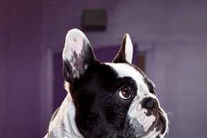Thomas Sabo's Disco Dog Collection
