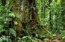 Amazon Rainforest to Go Online