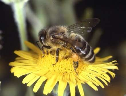 Cell Phones Killing Bees - Technology vs. Nature
