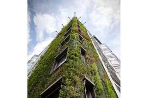 From Outlandishly Large Living Walls to Eco-Friendly Wall Decor