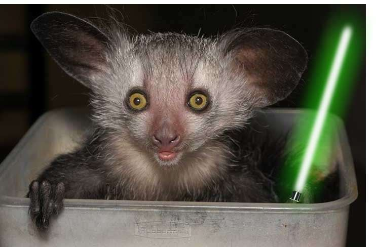 Animals With Lightsabers