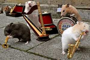 Ad for Drench Spring Water Features 'The Clever Hamsters'