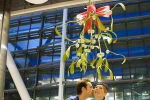 The Heathrow Mistletoe is the World's Biggest