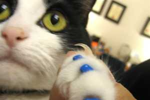 Feline Manicures in Crazy Colors