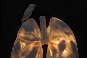 Kate MacDowell's Organs and Skeleton Porcelain