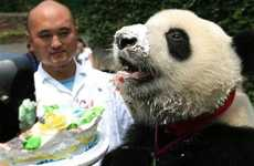Cake-Eating Pandas - The Panda Birthday Party Looks like Fun