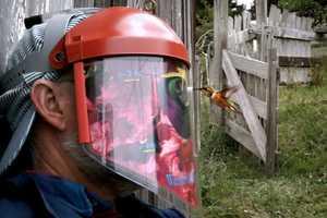 Bird Lovers Use Gear to See Hummingbirds Eye2eye