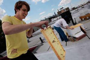 New York City's Gotham City Honey Co-Op Can't Sell Honey