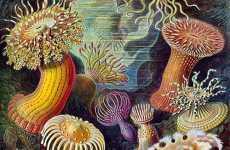 Botanical Artwork Revivals