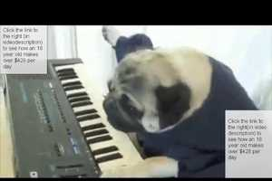 Keyboard Dog Steals the Show from Keyboard Cat