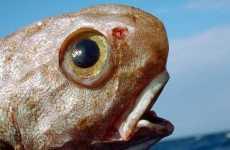 Sea Creature Closeups