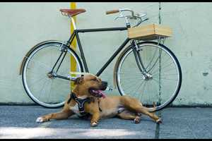 Fast Boy Cycles Builds Your Dream Bike Leaving No Detail Unplanned