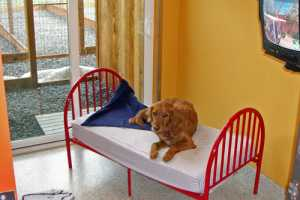 Enriching Overnight Outings for Dogs, Cats & Even Goldfish