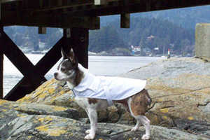 In One Move, Eco-Pup Covet Coats Make Your Dog Eco-Conscious and a Snob