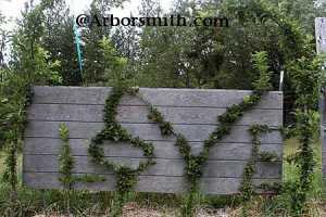 Richard Reames of Arborsmith Studios Grows Amazing Arborsculptures