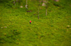 Itty-Bitty Landscapes - Noa Emberson Experiments with Tilt-Shift for 'The Little Things'