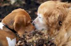 Online Dating for Dogs - Puppy Love Gets Digital
