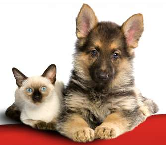 Customized Pet Food  - RedMoon Pet Food Offers Kibble to Keep Your Pet Happy and Healthy