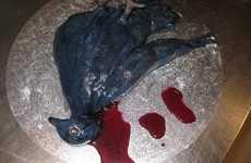 Dead Bird Baking