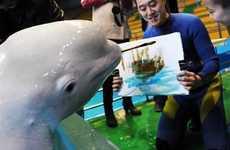 Amazing Artistic Porpoises