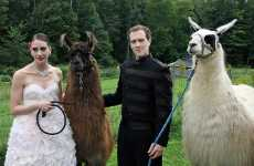 Llama Themed Weddings