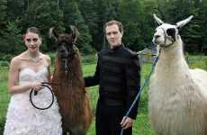 Llama Themed Weddings