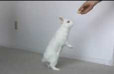 Rabbit Video Meccas