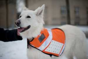 Messenger Dogs Keep Loved Ones in the Loop