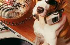 Nightclubs for Dogs