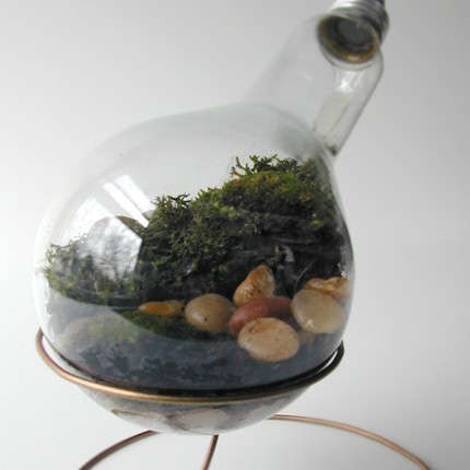 Recycled Light Bulb Terrariums