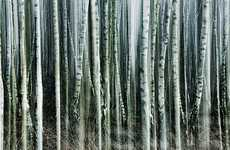 Blurry Birch Photography - The 'Vertical Woods' Photo Series by Jakob Wagner