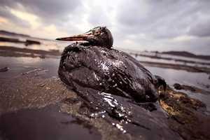 Matter of Trust Mats Made of Recycled Tresses Sop Up Gulf Oil Spill (UPDATE)