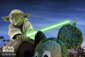 Say Hello to Disney Hollywood Studios' Star Wars Weekends