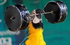 Avian Power-Lifters