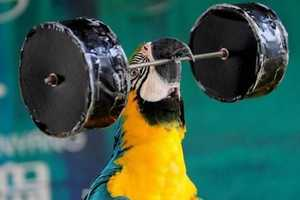 The Parrot Championships in China Shows Off Well-Muscled Birds