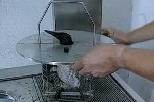 The Bird Washing Machine Allows for an Easier Oil Clean-Up