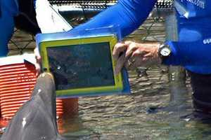 The iPad is the Missing Link to Communicate with Dolphins