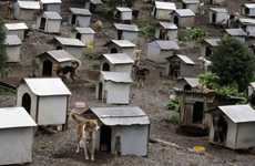 Abandoned Dog Communities