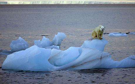 Polar Bear Protection