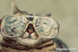 'Hipster Kitty' Documents the Life and Times of Scenester Cats