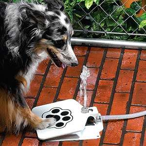 Pet Water Fountains - The Doggie Fountain Keeps Your Dog Hydrated with Ease