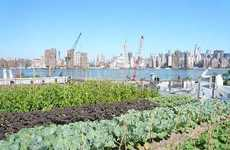 Sky Gardens - Eagle Street Rooftop Farm is a 6,000-Square-Foot NYC Project
