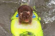 Surfing Mice