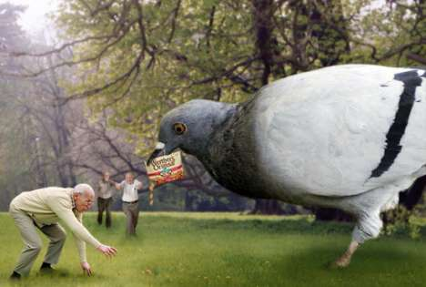 Birth Control Pill For Pigeons