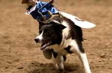 Dog-Riding Rodeo Monkey