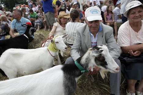 Goat Beauty Contest