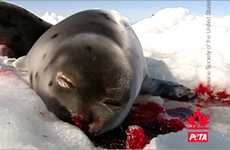 Shocking Cruelty Advertising - This Disturbing Baby Seal Clubbing PETA Ad Takes Aim at Canada