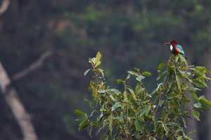 'Wild Life!' From Vrutika Doshi Captures Natural Habitats