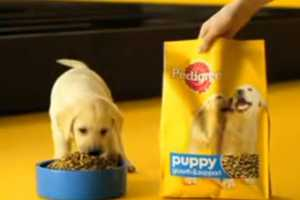 The Pedigree Puppy Commercial Showcases an Intelligent and Sneaky Pup